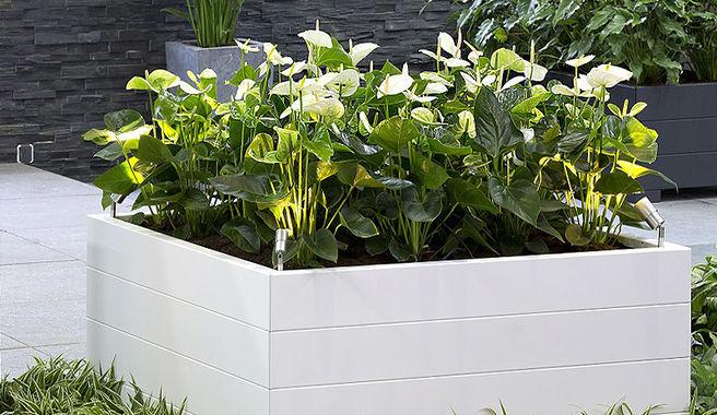 Bloembakken Voor Balkon.Plantenbakken Op Uw Dakterras Of Balkon Plaatsen Exclusieve